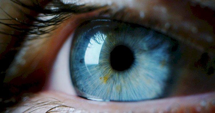 Суперхраните, които ще подобрят зрението ви